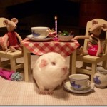 A Romantic Dinner For Two