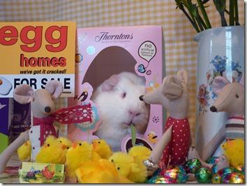 Egg Homes (10)