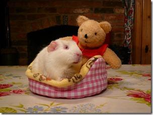 Fairy and Mr Bear goodnight (7)