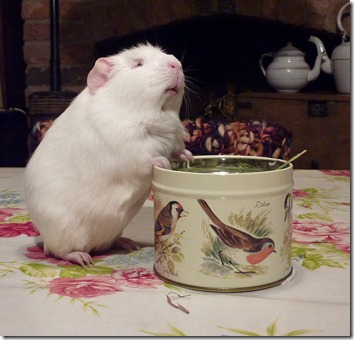 Fairy and her hay tin (9)