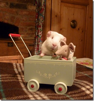 Fairy takes Mr Mouse out for a spin! (1)