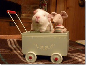 Fairy takes Mr Mouse out for a spin! (9)