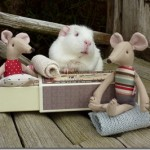Furnishing the mouse house!