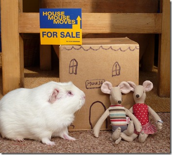 Mouse house moves box (4)