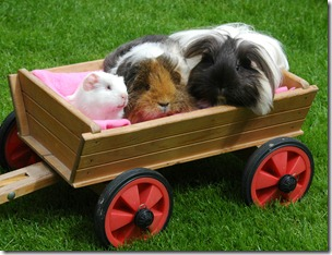 Piggies riding in their cart! 020809 ADJ
