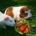 Summer Pignic!