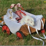 The Wedding Of Araminta and Montmorency Mouse!