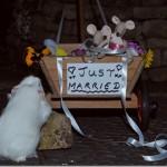 The Grand Wedding Reception!
