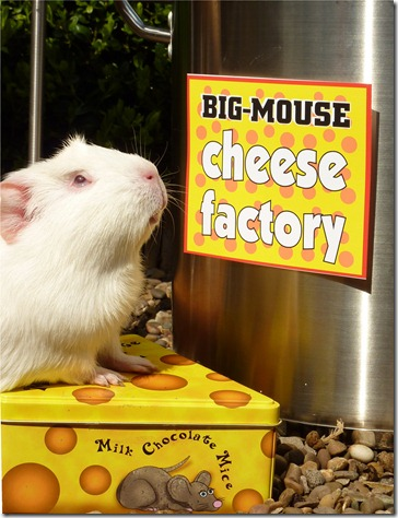 A job at the cheese facatory  (11)