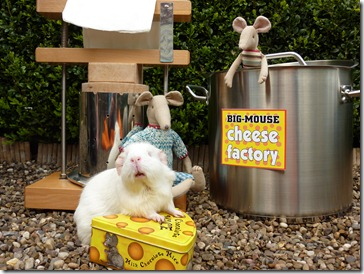 A job at the cheese facatory  (2)