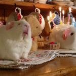 Fairy Cakes!