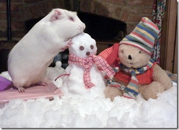 Fairy and Mr Bear build their snowman snow scene