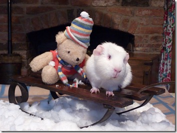 Fairy and Mr Bear on sledge (1)