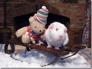 Fairy and Mr Bear on sledge (1)