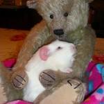 Bear Cuddles!
