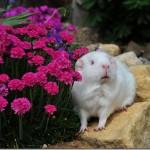 Fairy Flower Power!