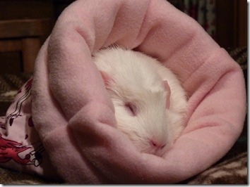 Fairy in pink cuddle sack (9)