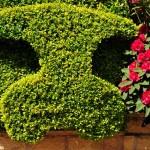 Hedge-pigs!