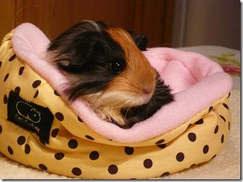 Mariella in spot bed (1)