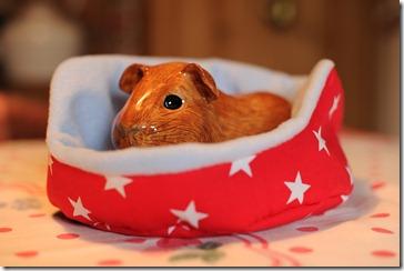 Piggy bank! (3)