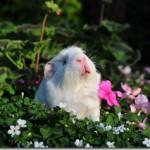 Everything In The Garden's Sneezy!