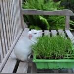 My Little Garden!