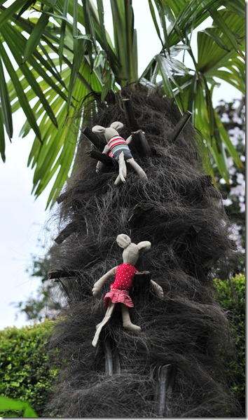 Tree palm climbing (3)
