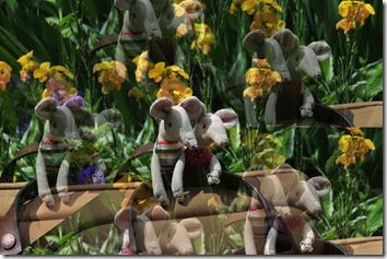 Visiting some gardens (8)b