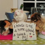 Three Pigs In A Home!