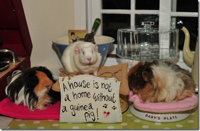 Ernie's lovely gifts! (5)