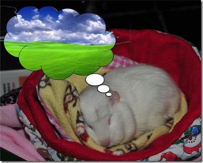 Fairy snoozing 1 (4)b