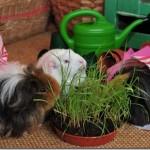 Fairy Grows Grass! FREE Online Tutorial.