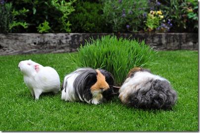 The grass has grown! (13)