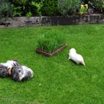 Fairy Grows Grass – On An Industrial Scale!