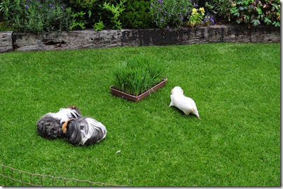 The grass has grown! (18)