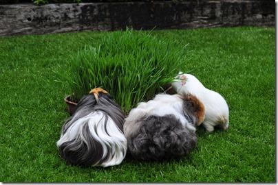The grass has grown! (8)