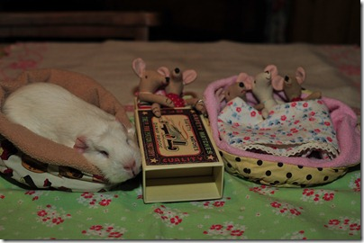Baby mouse bedtime (10)
