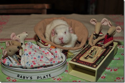 Baby mouse bedtime (12)