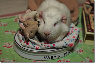 Baby mouse bedtime (16)