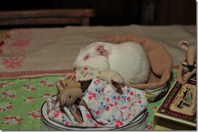 Baby mouse bedtime (18)
