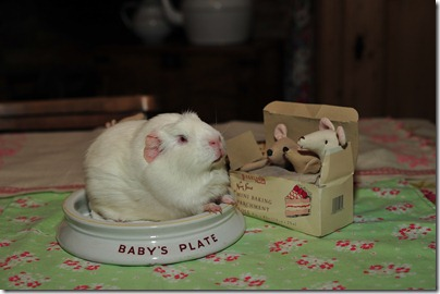 Baby mouse bedtime (21)