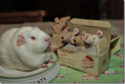 Baby mouse bedtime (23)