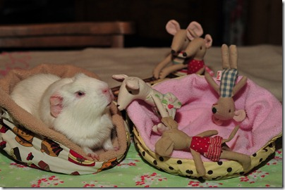 Baby mouse bedtime (4)