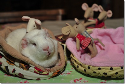 Baby mouse bedtime (7)