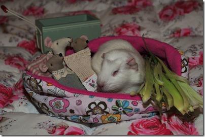 Bedtime story (5)b