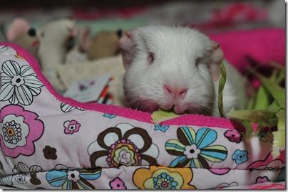 Bedtime story (8)
