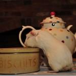 Time For Tea, Fairy!