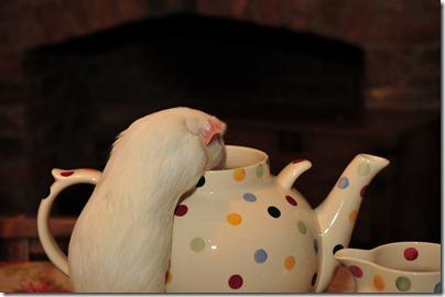 Fairy takes tea! (22)