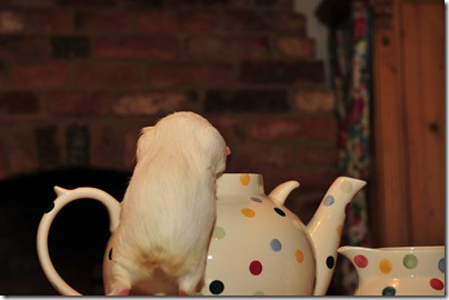 Fairy takes tea! (24)