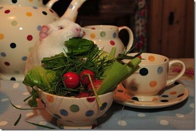 Fairy takes tea! (51)